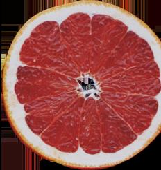 Grapefruit | Caffè Cento